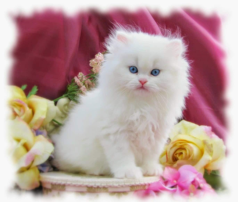 اسماء قطط كيوت عربية