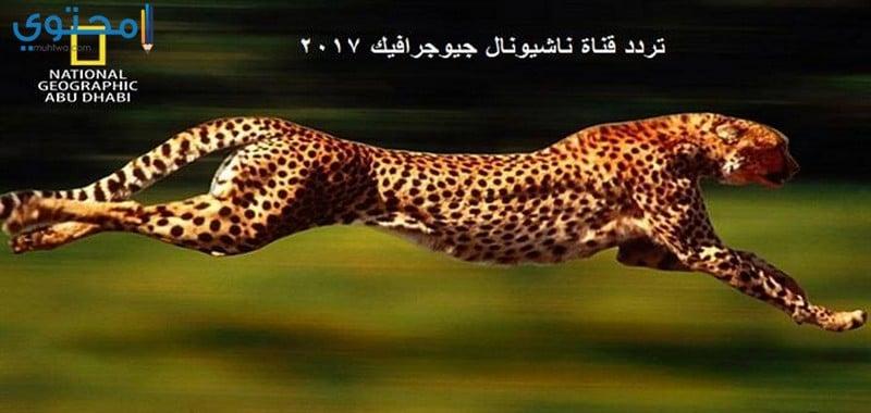 تردد قناة ناشيونال جيوغرافيك أبوظبي