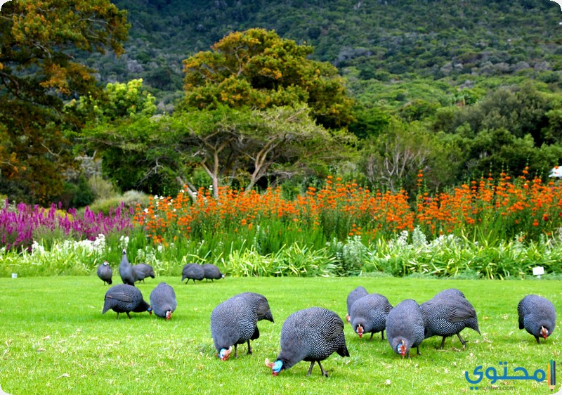 حدائق كيرستينبوش النباتية في جنوب افريقيا