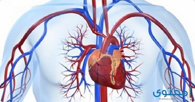 كوليليسيس Cholilysis علاج الدهون الزائدة بالدم