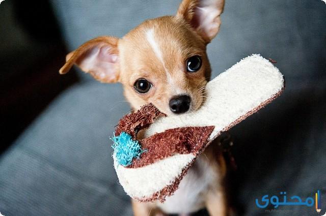 كيفية تدريب الكلاب على عدم العض