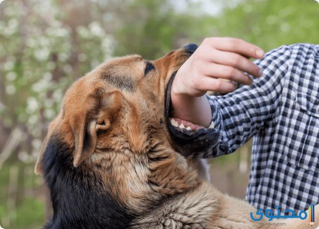 تدريب الكلاب على عدم العض