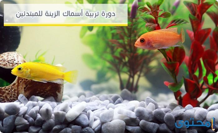 كيفية تربيه الأسماك بالمنزل