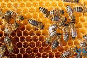 تفسير رؤيه النحل فى المنام بالتفصيل
