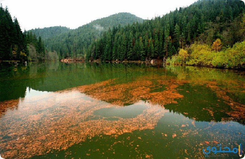 بحيرة كيو