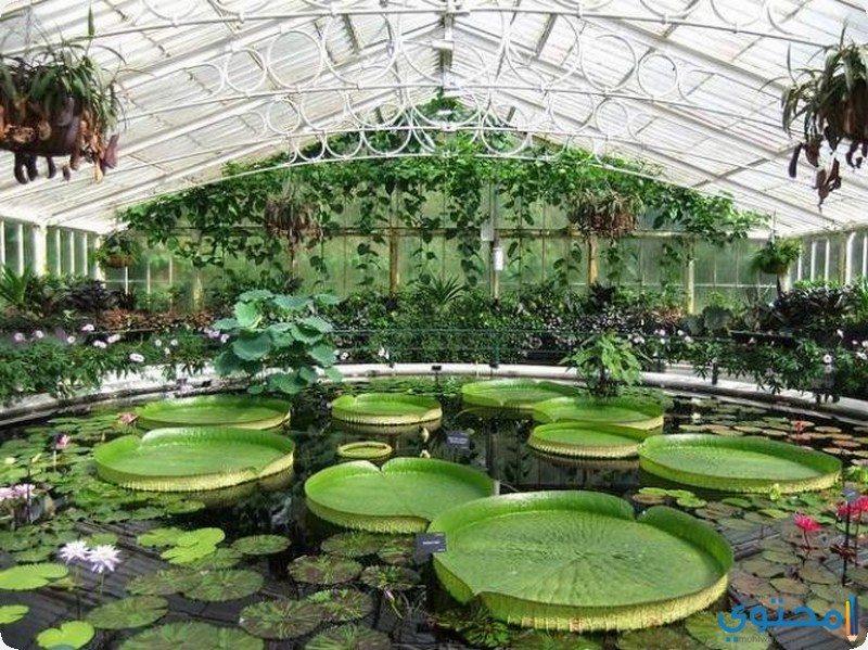 الحدائق النباتية الملكية في كيو