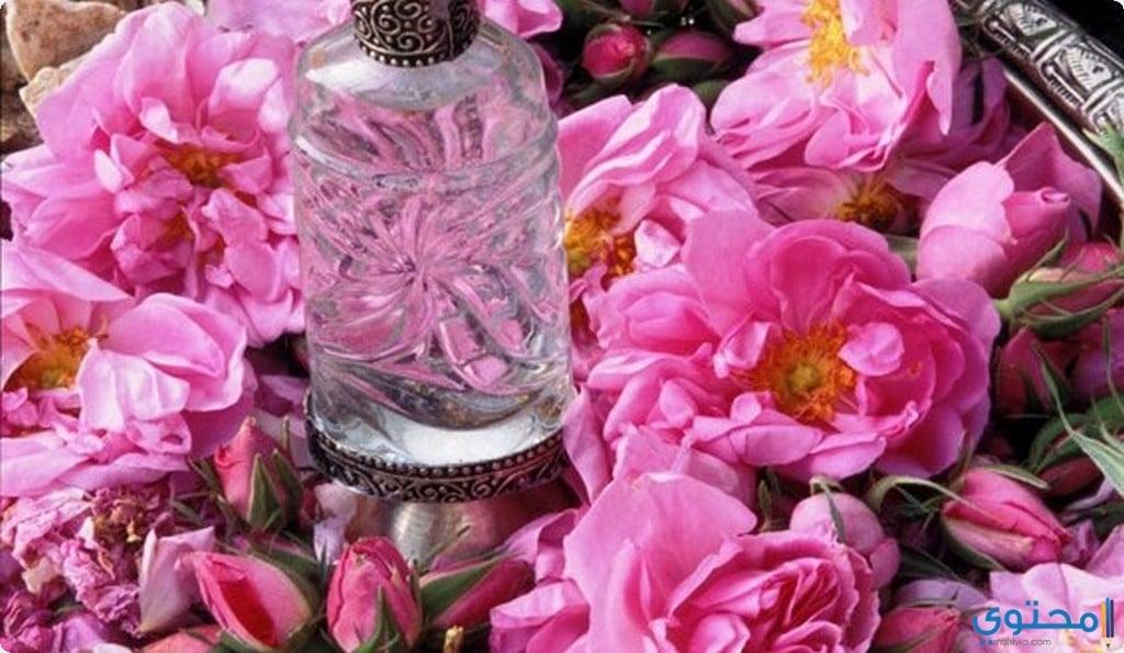 ما هو ماء الورد