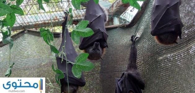 مامعنى دخول الخفاش المنزل