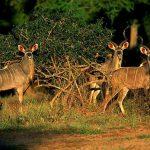 تقرير السياحة في زيمبابوي بالصور