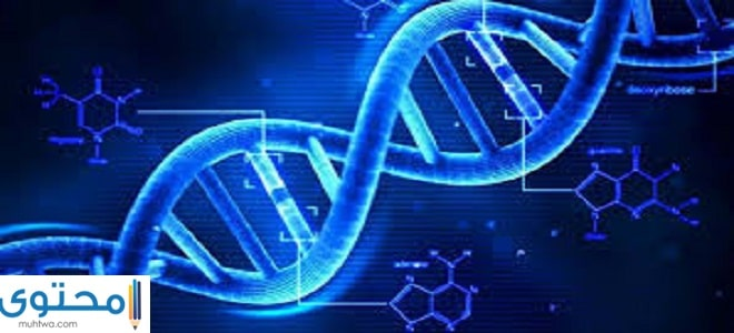 ما هو الحمض النووي
