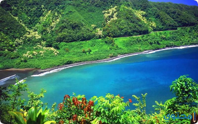 جزيرة ماوى