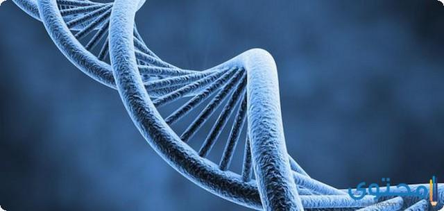 ما هو سعر تحليل الجينات في مصر