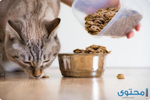مدة هضم الطعام للقطط