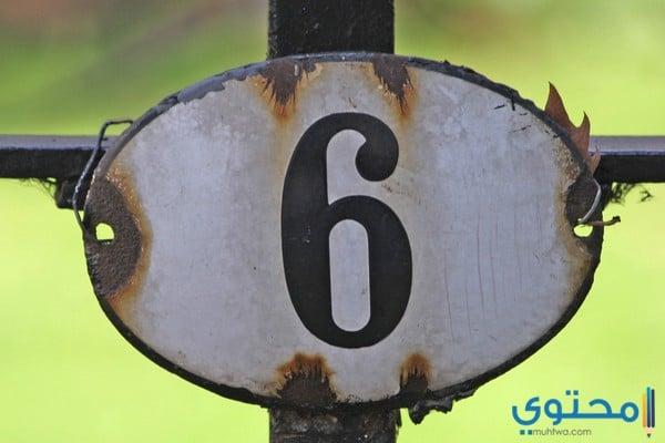 صفات أصحاب مسار الحياة رقم 6 والعمل