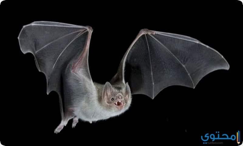 الخفافيش الكاذبة المصاصة للدماء