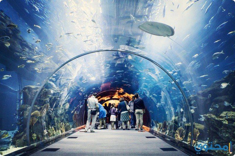 معالم وصور السياحة في دبي معالم-دبي06.