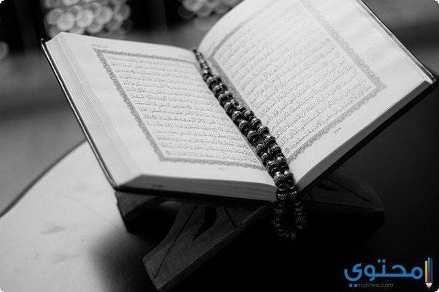 معلومات ثقافية اسلامية