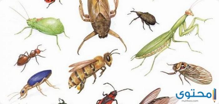 معلومات عن أخطر حشرات في العالم