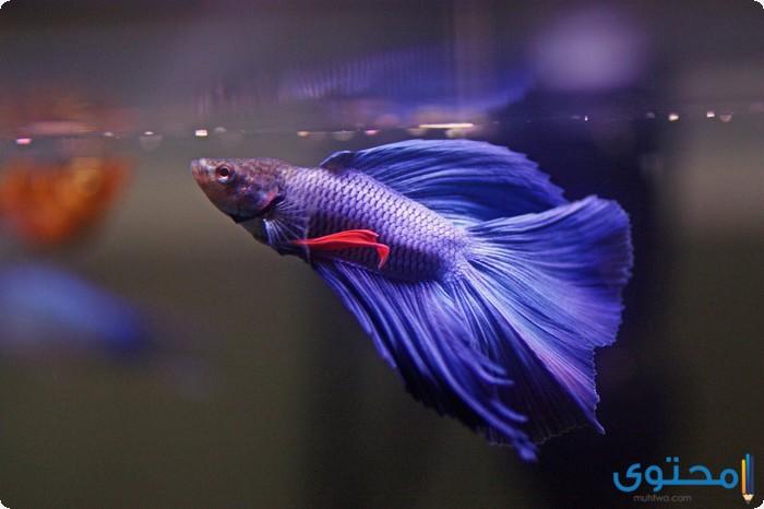 معلومات عن الأسماك جديدة