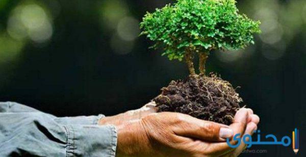 مقدمة بحث البيئة