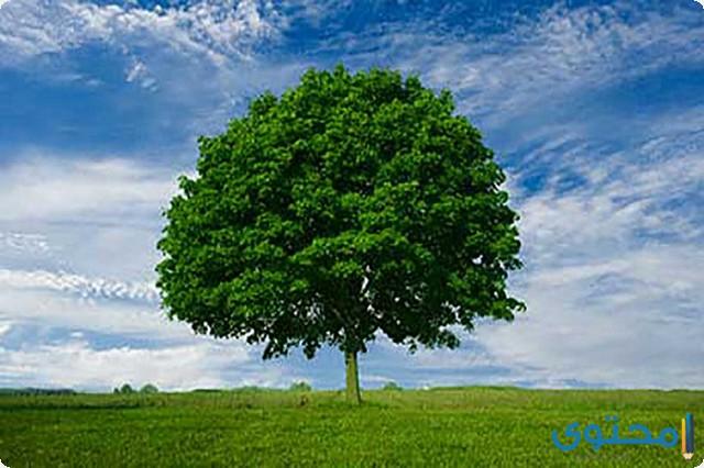 موضوع تعبير جديد عن أهمية الأشجار 2020