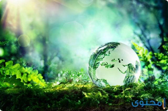 البيئة الصالحة والبيئة الفاسدة