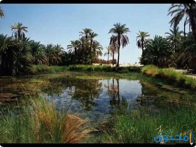 موضوع تعبير جديد عن الريف المصري 2022