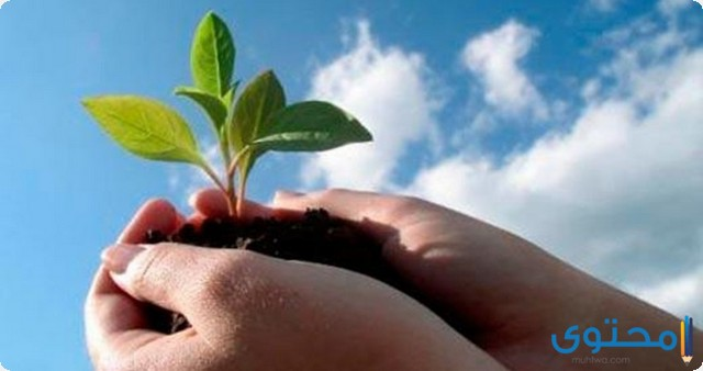 موضوع تعبير جديد عن المحافظة على البيئة 2020 - موقع محتوى
