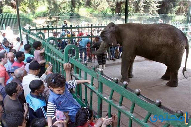 موضوع تعبير جديد عن حديقة الحيوان 2022