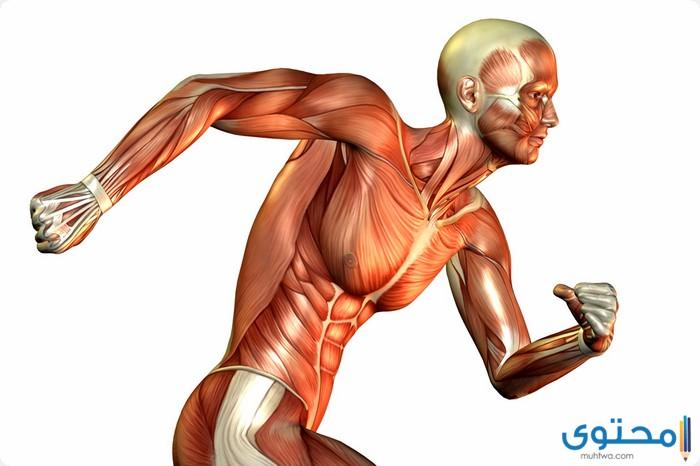 موضوع تعبير عن أهمية الرياضة لجسم الإنسان