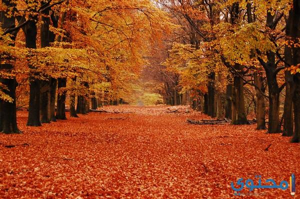 مظاهر فصل الخريف