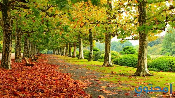 أهمية فصل الخريف