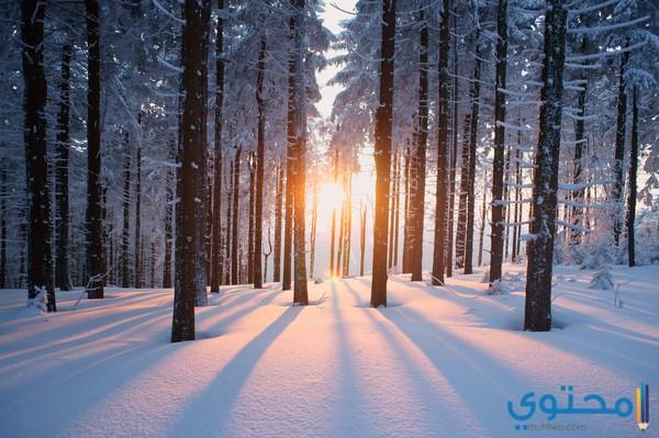 أهمية فصل الشتاء