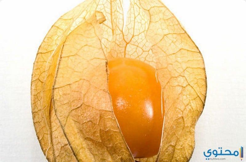 فوائد نبات الاشواجندا للجلد والبشرة