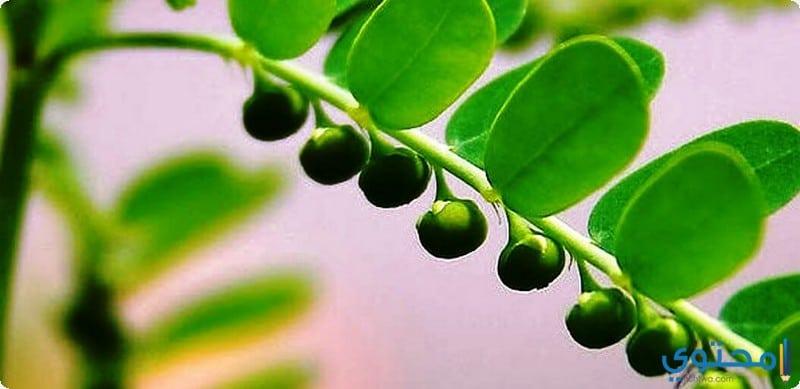 طرق استخدام نبات الاملج للشعر