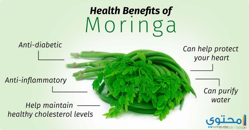 فوائد المورينجا للجسم تعرف على فوائد نبات المعجزات - موقع محتوى