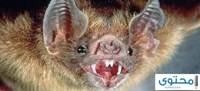 هل الخفاش يؤذي الانسان