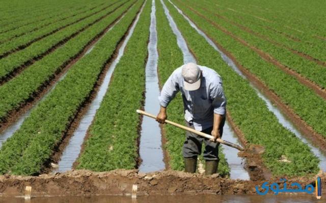 هل تعلم عن الزراعة