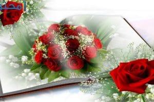 أجمل ورود الحب في العالم