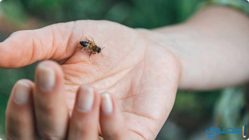 أعراض لسعة النحلة