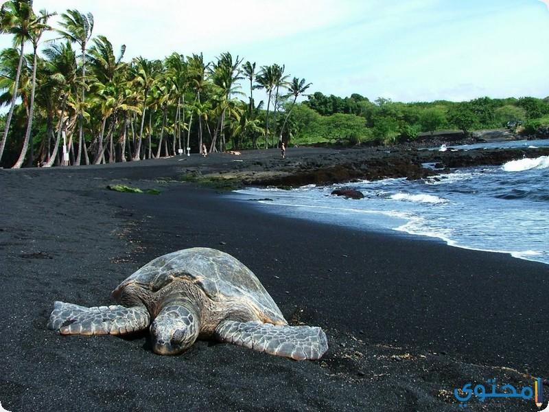 شاطئ بونالو, في هاواي