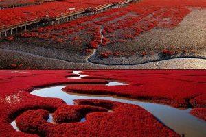 تعرف على الشاطيء الاحمر في الصين بالصور