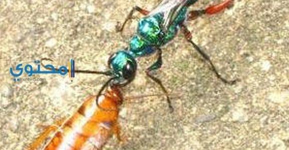 النمل والصراصير فى حلم العزباء والمتزوجة والحامل