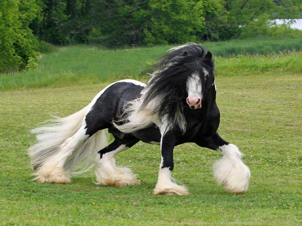 صور الخيول بيضاء وسوداء