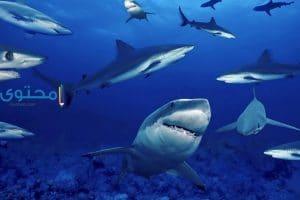 تفسير رؤية اسماك القرش فى الحلم بالتفصيل