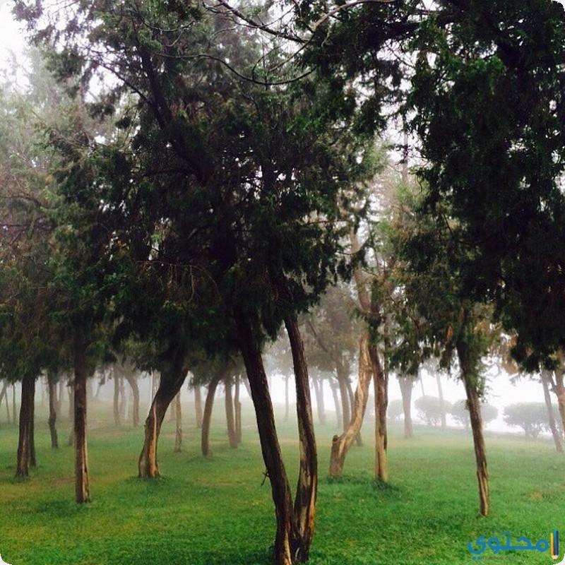 غابة رغدان