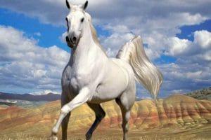 تفسير رؤية الحصان الأبيض والأسود فى المنام