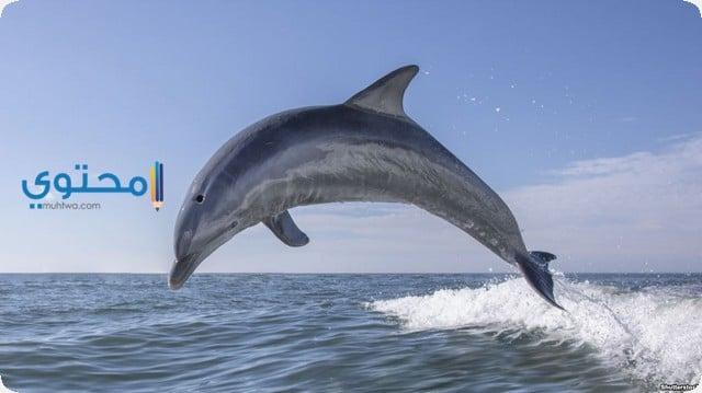 تفسير رؤية الدولفين فى الحلم بالتفصيل