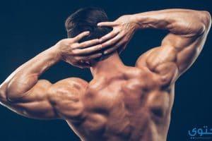 تمرينات تضخيم عضلة الظهر