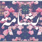 معنى اسم بشامة Bashamh بالتفصيل